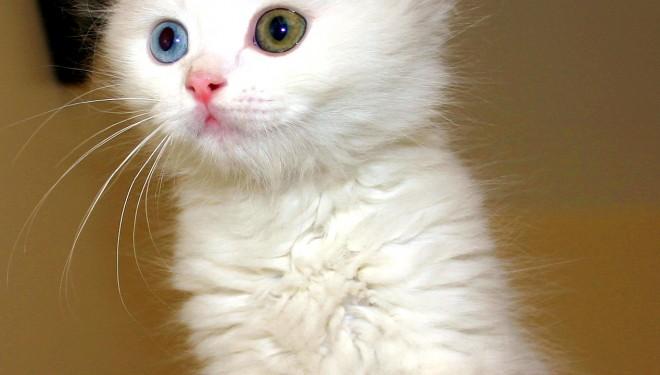 Marea Britanie: Primele cazuri din lume de tuberculoza transmisa de la pisica la om