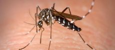 Primul caz de infecție cu West Nile din 2019, confirmat în Galați