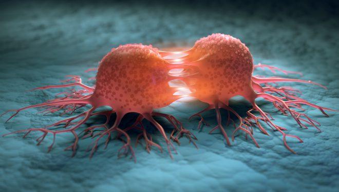 Studiu: Veninul albinelor europene poate distruge celulele celei mai grave forme de cancer la sân
