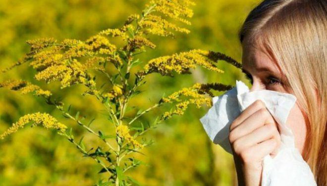 """Cum se tratează alergia de ambrozie? Medic: """"E o problemă care ar trebui să depăşească sfera medicală"""""""